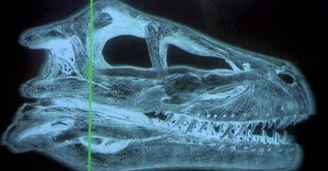 Mecha Raptor — polycount |Velociraptor Skull Front