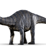 Apatosaurus sp. (S/F)