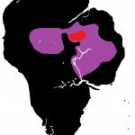 Moreton Bay Fig (S/F)
