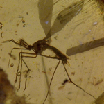 Mosquito (S/F) | (C/N) | (JN) | (CB) | (L/M)