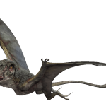 Dimorphodon macronyx (S/F)