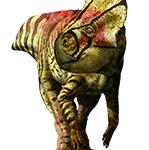 Microceratus gobiensis (S/F)