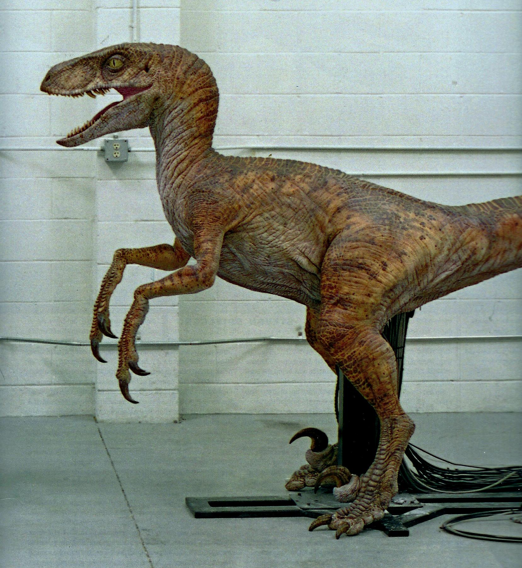 Tlw Female Raptor
