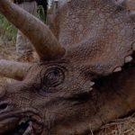 Triceratops horridus (S/F) / (S/F-T/G) / (S/F-S)