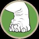 Bumblefoot (S/F)