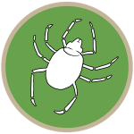 Ticks (S/F)