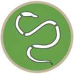Hookworms (S/F)