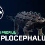 Euoplocephalus tutus (S/F)
