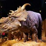 Pachyrhinosaurus sp. (S/F)
